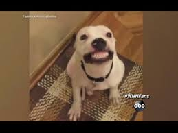 Dog Smiling Meme - dog smiling on cue will make your day youtube
