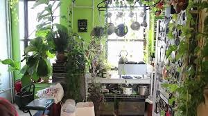 indoor garden plants gardening ideas
