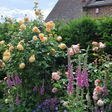 crown princess margareta plan ahead and plant this autumn