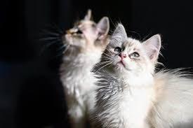 alimentazione casalinga gatto alimentazione gatto a 4 mesi come deve essere dogalize