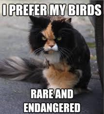 Mean Cat Memes - wild birds of new zealand v mean cats team kenan at the kenan
