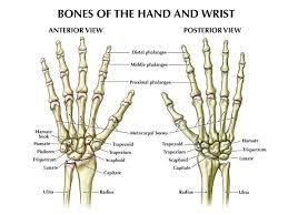 Normal Bone Anatomy And Physiology Best 25 Body Anatomy Ideas On Pinterest Female Body Art Body