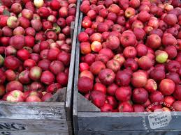 free apple photo red apples picture apple stall image royalty