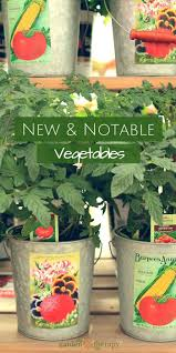 Vegetables For Container Gardening by 235 Best Edible Gardening Images On Pinterest Gardening