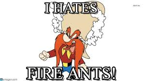 i hates fuming yosemite sam meme on memegen