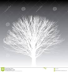 white tree silhouette stock vector image of barren single 5749675
