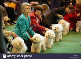 boxer dog crufts 2014 crufts dog show stock photos u0026 crufts dog show stock images alamy