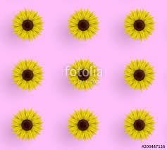sunflower wrapping paper seamless vector pattern of sunflowers illustration on a pink