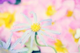 Cute Flower Wallpapers - cute flowers hd desktop wallpaper widescreen high definition