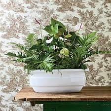 Indoor Container Gardening - 14 best indoor plants images on pinterest indoor plants floral