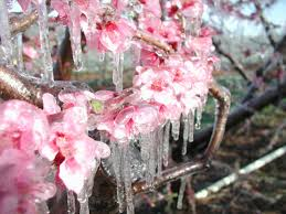 quotes about winter flowers