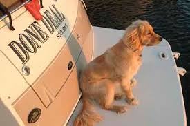 Comfort Golden Retriever Breeders Country Retriever Puppies Our Puppies
