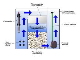 le regole principali per allestire e gestire un acquario d acqua
