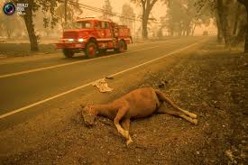 California Wild Animals images Fighting the california wild fires jpg