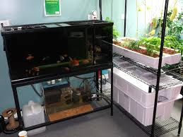 tales from a groovy grower hydroponics aquaponics and indoor