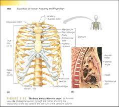 Apologia Human Anatomy And Physiology Human Anatomy And Phsiology Gallery Learn Human Anatomy Image