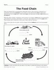 food chain diagram teachervision