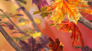 11 autumn live wallpapers android androidheadlines