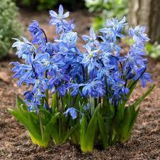 blue longfield gardens