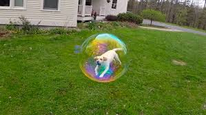 this freeze frame trapped my dog in a bubble x post from r aww