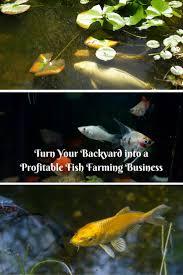 backyard fish farming can be a profitable business however you