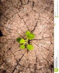 tree on stump stock image image of planting 35373701