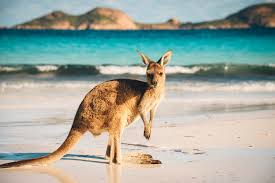 australia tourism bureau tourism australia connects with travelers through ads dmn