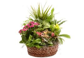 outdoor flowers for all of your outdoor billy heromans