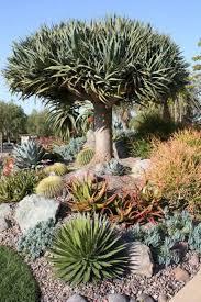 desert plants for landscaping