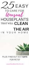 Easy House Plants 25 Best Indoor Plants For Minimalist Homes Mamabear Martin