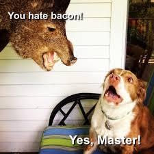 Dog Bacon Meme - dogs love bacon meme anonamos3021