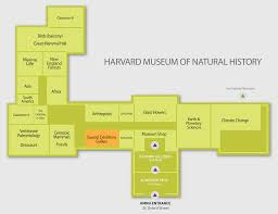 Floor Plan For Classroom by Floor Plan Harvard Museum Of Natural History