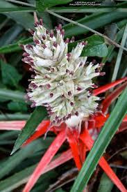 plants native to florida florida u0027s thorniest plants phillip u0027s natural world