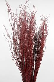Decorative Stems For Vases Curly Willow Branches And Birch Branches 20 60 Off Saveoncrafts