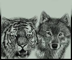 tiger and wolf id by amarevia on deviantart