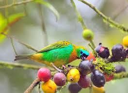 Pássaros mais bonitos do mundo