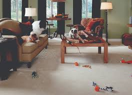 What Is Stainmaster Carpet Made Of Best Carpet For Pets Stainmaster Petprotect Carpet By Godfrey