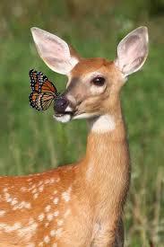 266 best butterflies images on beautiful butterflies