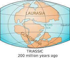 in the mid triassic period the super continent pangea began to