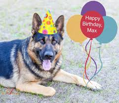 dog birthday party 5 tips on hosting a birthday party for your dog an alli