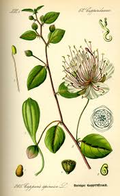 flower encyclopedia list of indian spices the free encyclopedia pinteres