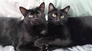 crochet amigurumi halloween black cat pattern