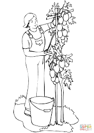 man planting tomatoes coloring page free printable coloring pages