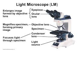 a light microscope image is formed by copyright 2009 pearson education inc powerpoint lectures for