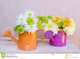 beautiful chrysanthemums flowers in orange and purple water cans