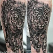 tiger vs tiger tattoos meanings ideas