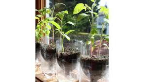 self watering indoor planters diy indoor gardening self watering soda bottle planter rentcafe