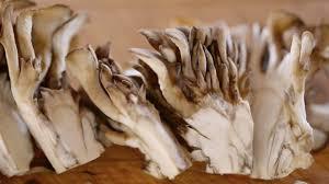 home clambake u2013 maitake mushrooms clambake pinterest maitake