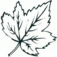 the most elegant maple leaf coloring page with regard to present