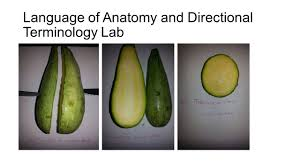 Anatomy And Physiology With Lab Online Hands On Labs For Online Anatomy And Physiology Dr Christine